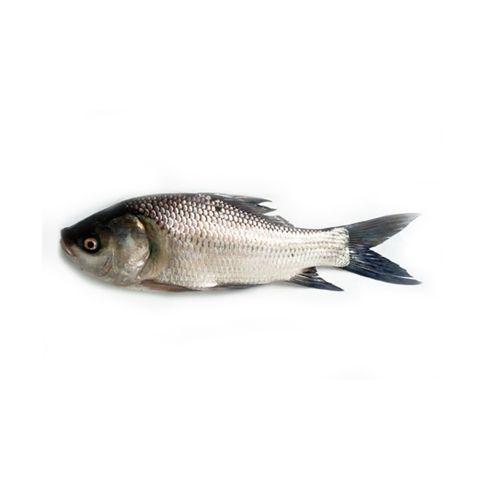 Reddy fisheries Fish - Rohu (Curry Cut/Bengali Cut), 1 kg