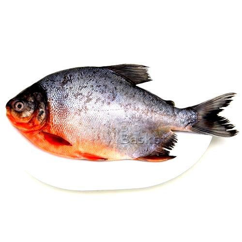 Gangaputra fisheries Fish - Roop Chand, 1 kg