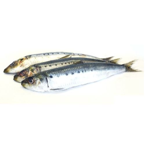 Gangaputra fisheries Fish - Sardine, 1 kg