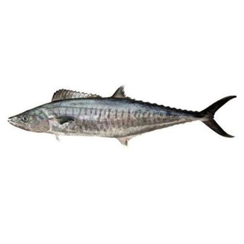 Gangaputra fisheries Fish - Seer, Big, 1 kg