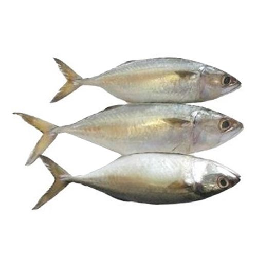 Machhiwala Fish - Fresh Mackerel, Single Bone, 1 kg Fry Cut