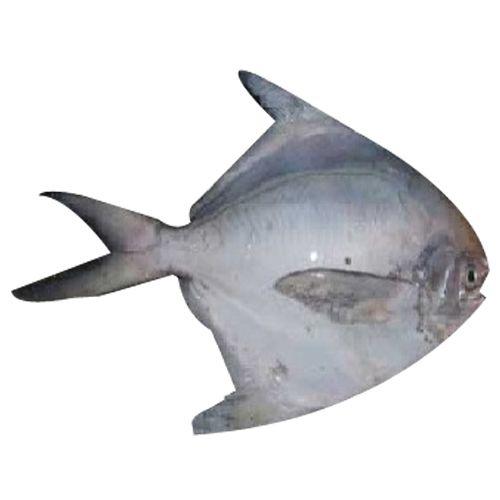 Pacific Sea Foods Fish - Silver Pomfret, 500 g 6 to 7 pcs