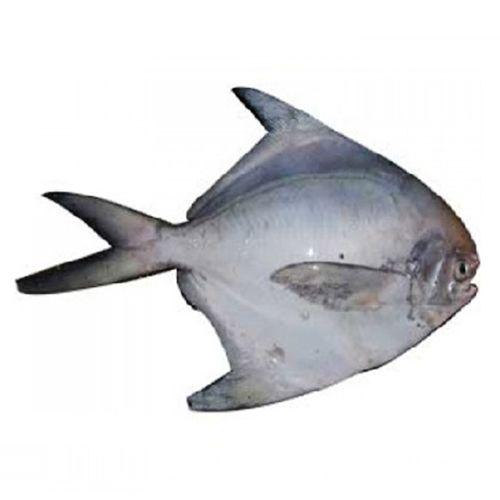 Pacific Sea Foods Fish - Silver Pomfret, 3 - 4 Pcs, 500 g