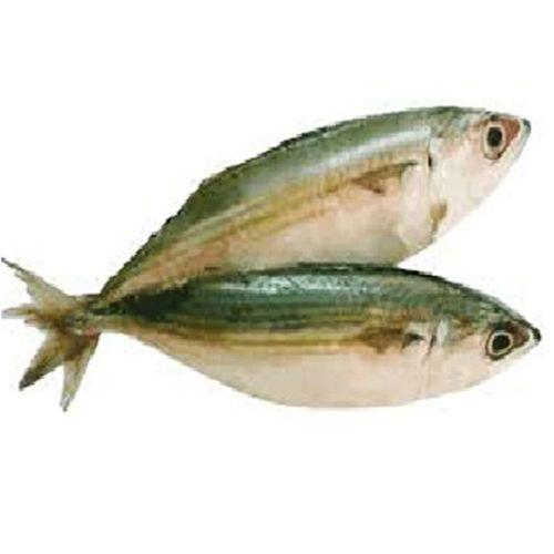 Pacific Sea Foods Fish - Mackerel / Bangda, 500 g